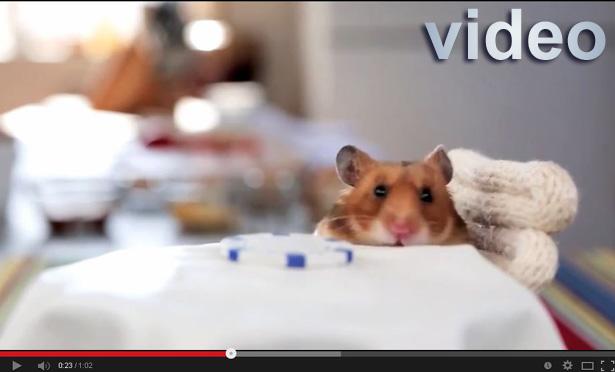 hampster videoeramatør porno web