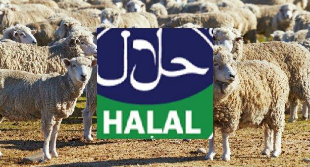 halalslagtning forbudt