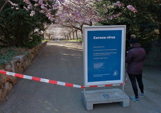 Nu blomstrer kirsebæralleen på Bispebjerg